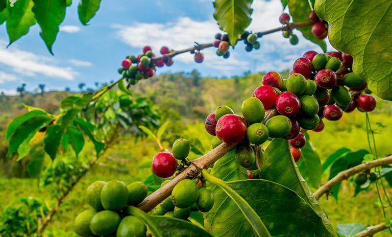 sitios turísticos de Colombia eje cafetero