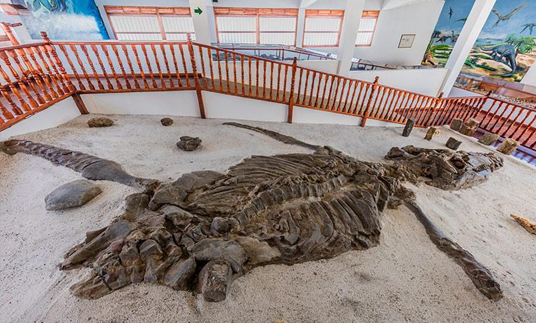 museo paleontológico de villa de leyva