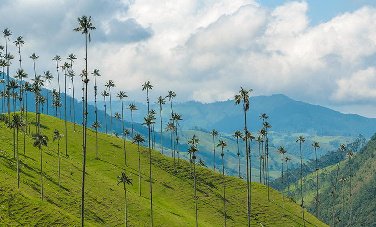 valle de cocora uno de los lugares mágicos de Colombia