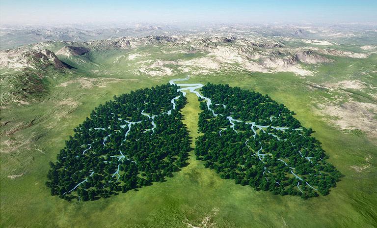 arboles en forma de pulmones celebran el día internacional de la tierra