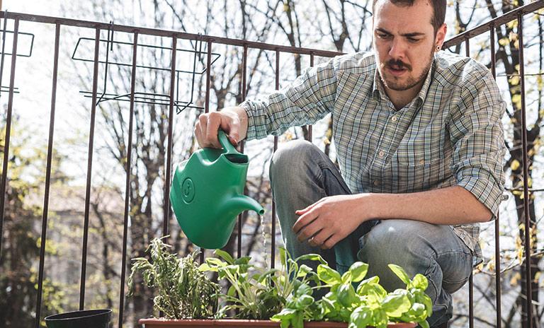 plantar especias en casa requiere dedicación