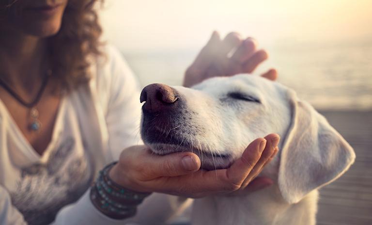 Persona dando amor en el Día Mundial del Perro