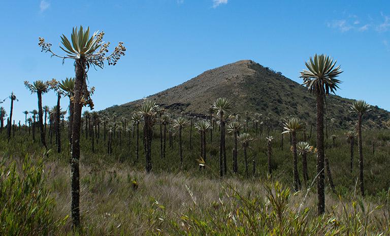 Parque Natural Chingaza, un paraíso natural cerca de Bogotá